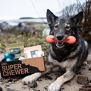 Super Chewer deals