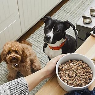 The Farmer's Dog deals