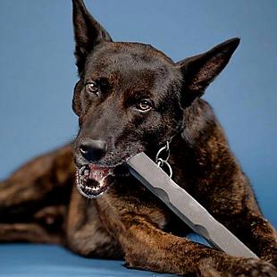 Bulletproof Pet Products deals