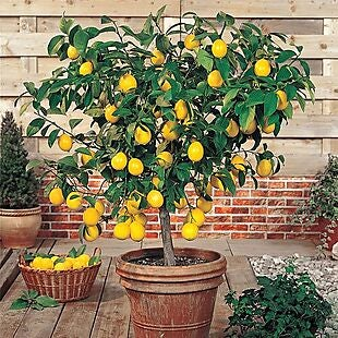 PlantingTree deals